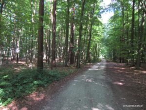 Świetliste lasy liściaste
