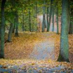 Szutrowy fragment drogi w lesie