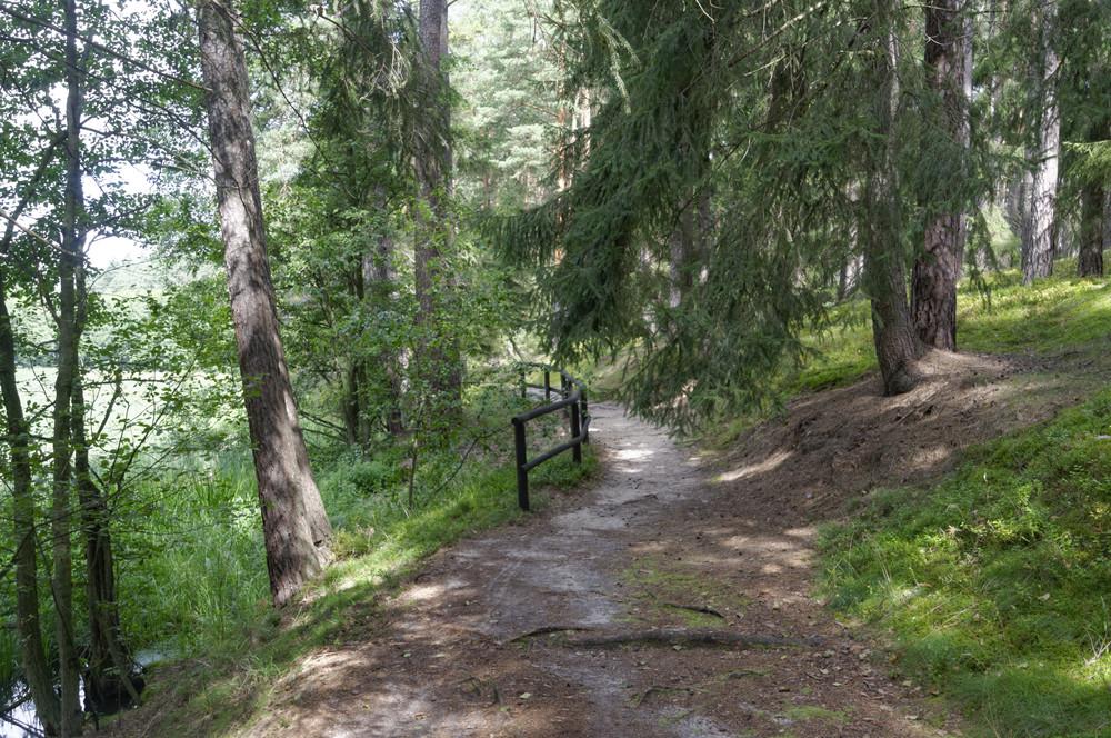 Szlak Gołąbkowy - Rezerwat bagna nad Stążką