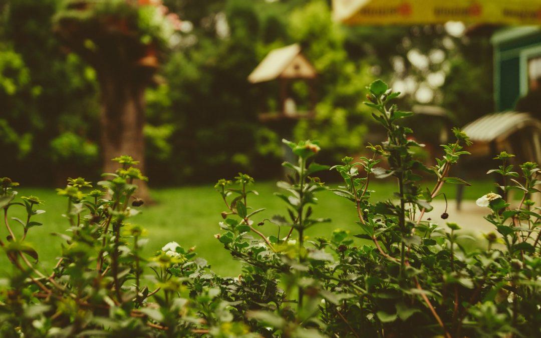 3 sposoby na udaną majówkę w przydomowym ogrodzie